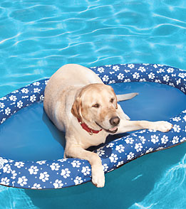 SwimWays Dogs' Spring Float Paddle Paws (Small 0-65lbs)