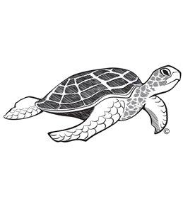 H2O Toos Turtle Temporary Tattoo